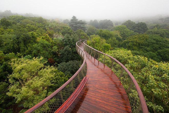Khám phá cây cầu đi bộ trên những ngọn cây