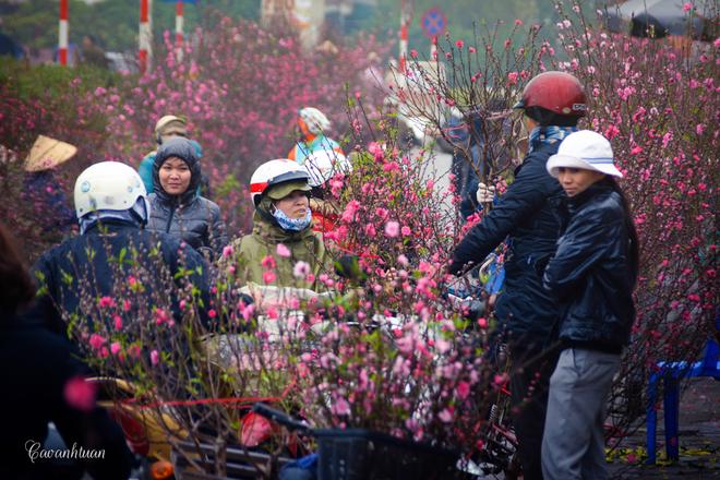Chợ hoa đào quảng bá nhộn nhịp ngày giáp tết