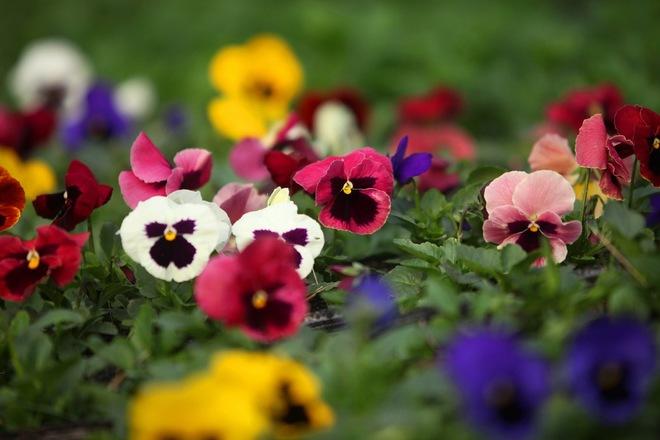 Cuối tuần đi vườn hoa xuân quan đón tết sớm