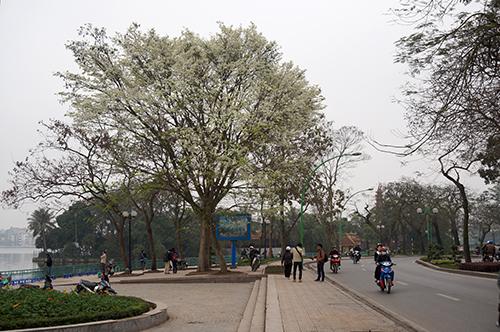 Ngắm nhìn lại hà nội đẹp dịu dàng trong mùa hoa sưa