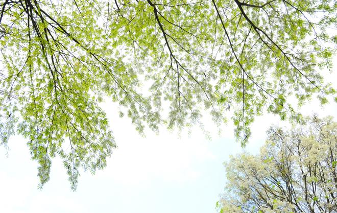 Hà nội rực sắc màu vào khúc giao mùa tháng 3