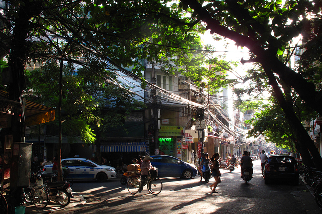 Xanh tươi quyến rũ những hàng cây ở hà nội phố