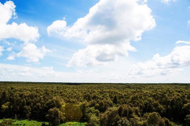 Khám phá rừng tràm trà sư thời khắc giao mùa