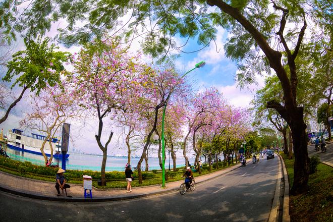 Góc hồ tây mộng mơ bởi sắc tím hoa ban