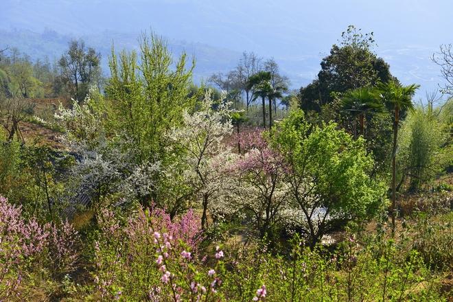 Tiên cảnh trên y tý mùa vào xuân