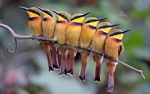 Vác balo lên và đi xem chim