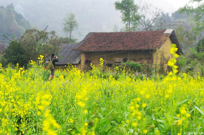 Cuối năm mùa hoa nở rộ mời gọi du khách