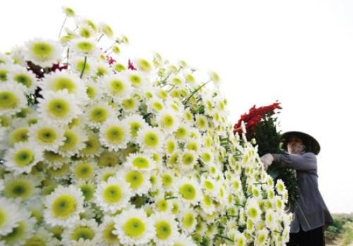 Ngắm muôn sắc hoa rực rỡ ở chợ hoa đêm đất cảng