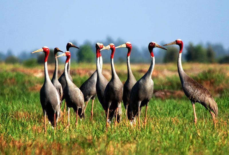 Những địa danh lý tưởng để ngắm chim ở miền nam