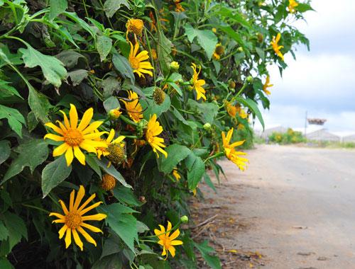 Nơi ngắm những sắc hoa rực rỡ tháng 11