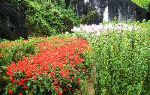 vườn thượng uyển hàm rồng bốn mùa nở hoa