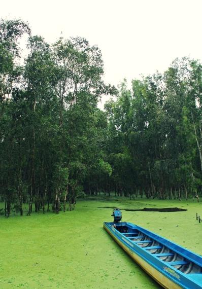 Khám phá rừng tràm trà sư mùa nước nổi