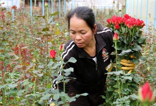 Ba làng hoa nổi tiếng đà lạt