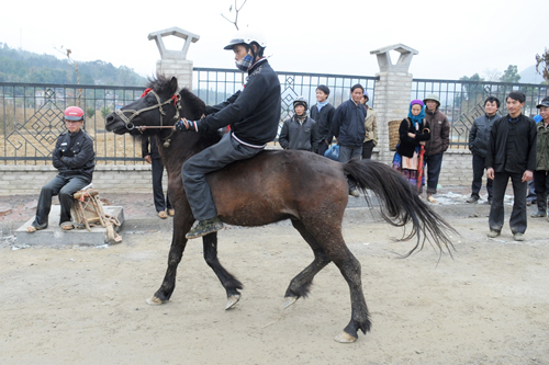 Phiên chợ ngựa nổi tiếng nhất vùng tây bắc