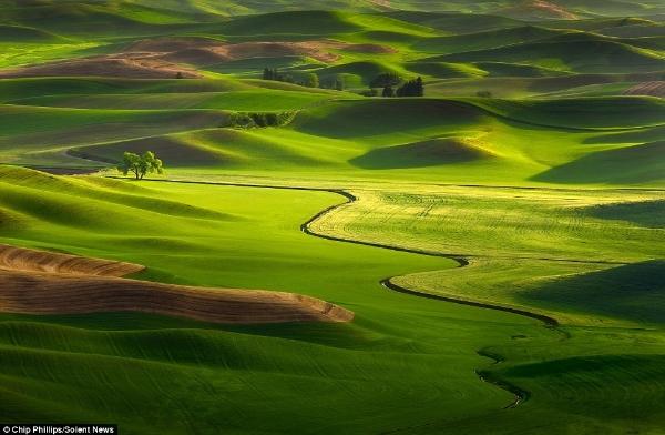 Hình ảnh tuyệt đẹp của những cánh đồng trên đất mỹ