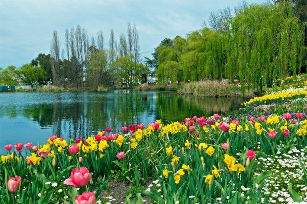 Lễ hội hoa floriade cuộc hẹn mùa xuân nước úc