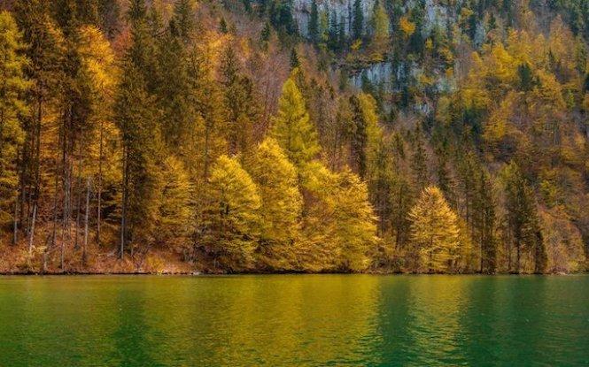 Loạt ảnh mùa lá rụng tuyệt đẹp trên khắp trái đất
