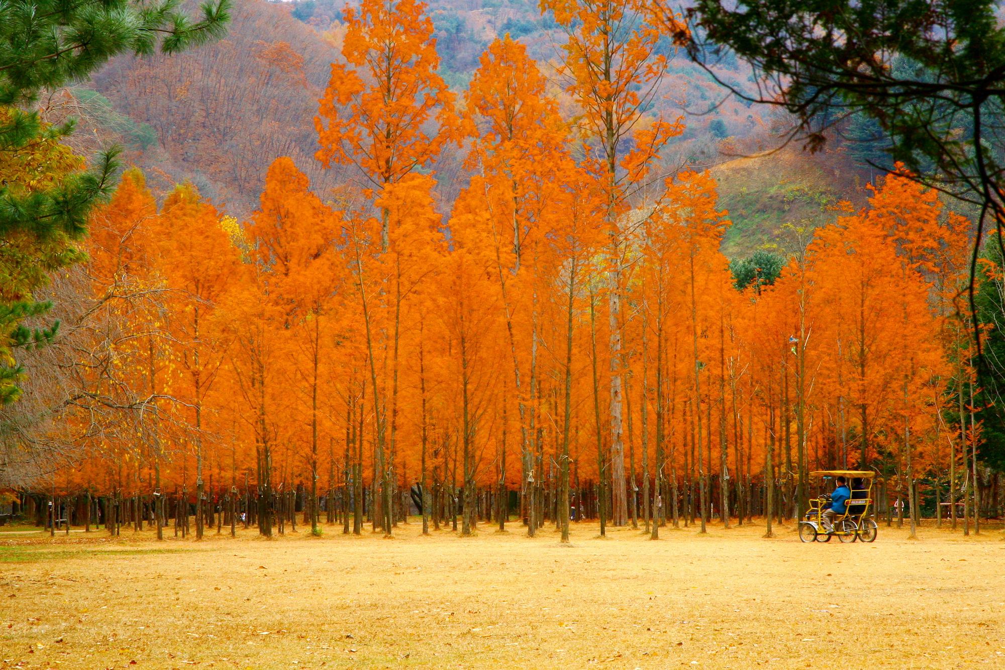 mùa săn lá đỏ bắc á