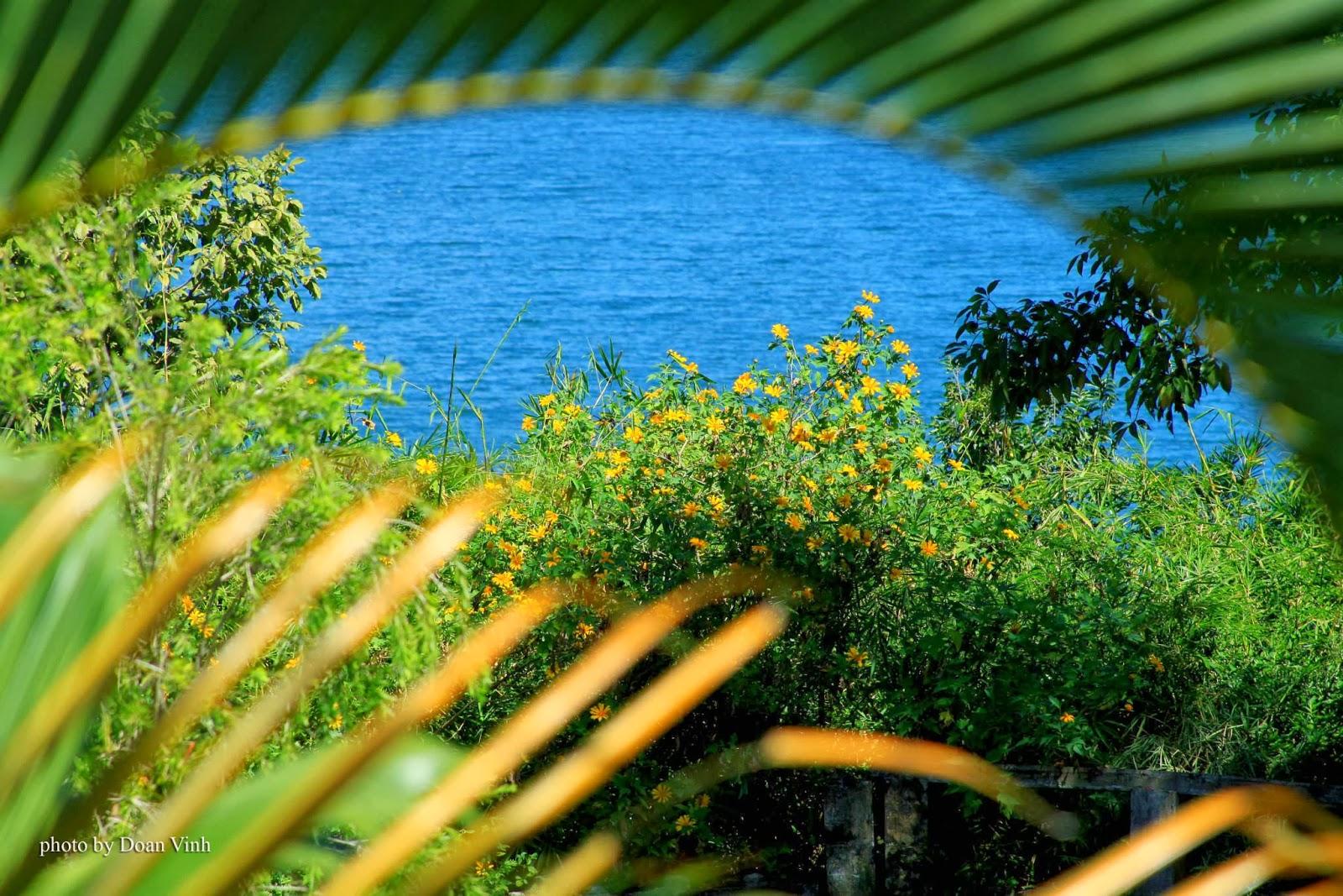 Tháng 10 đến đà lạt ngắm biển hoa dã quỳ