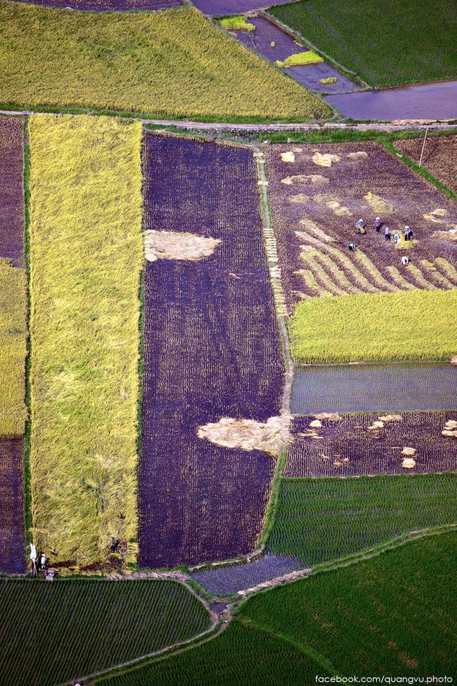 Vẻ đẹp mê hoặc của cánh đồng lúa mới gặt ở bắc sơn