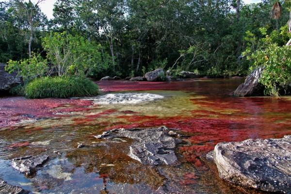 Chùm ảnh cano cristales dòng sông ngũ sắc ấn tượng nhất thế giới