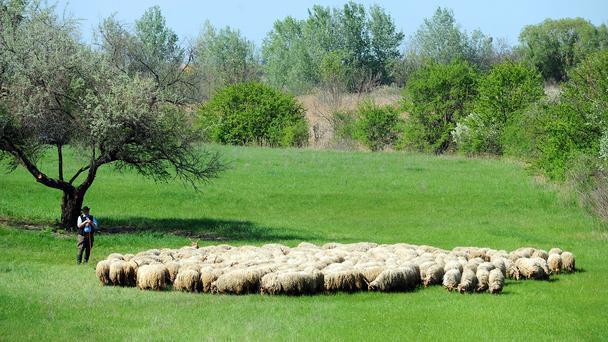 Hungary vùng đất cao bồi của châu âu