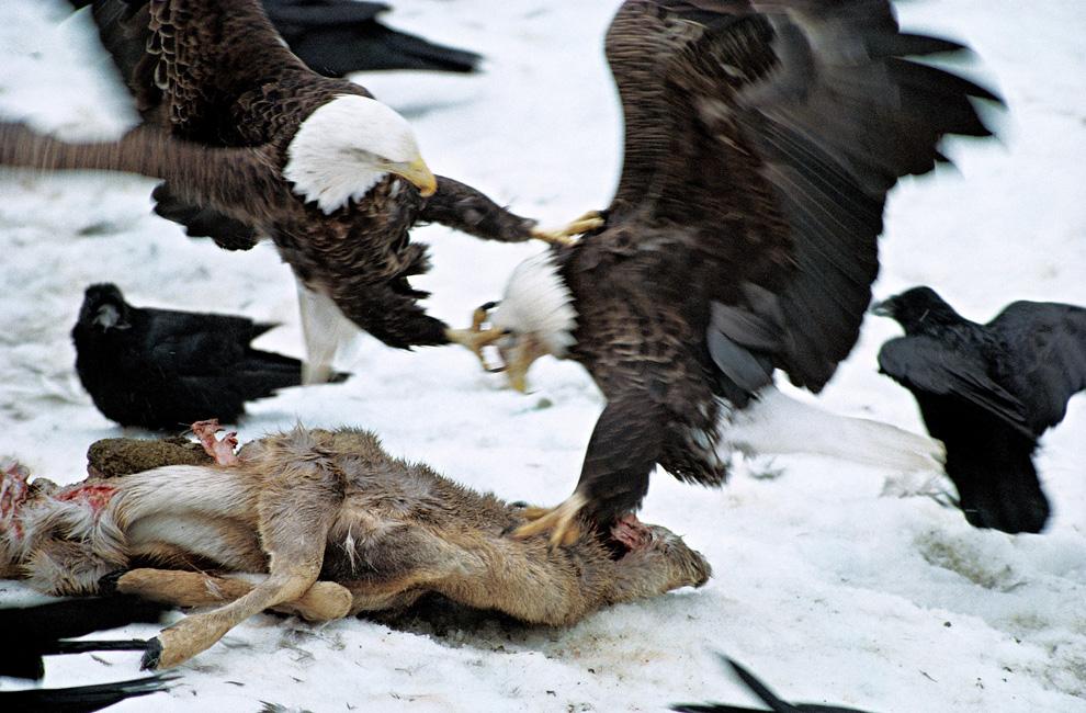 Loạt ảnh đẹp về cuộc di cư vĩ đại của các loài động vật