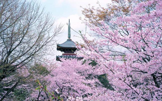 lạc lối giữa lòng thành phố tokyo
