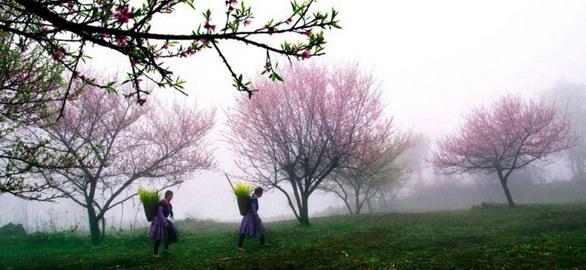 Ngỡ ngàng giấc mộng hoa phương bắc