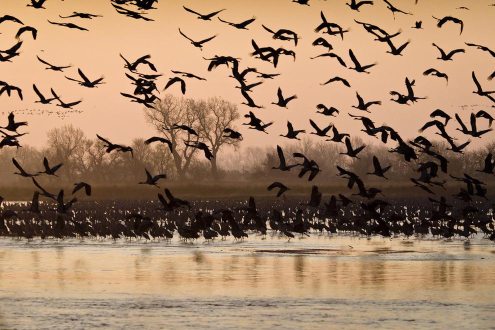 Theo dấu cuộc di cư vĩ đại của các loài vật