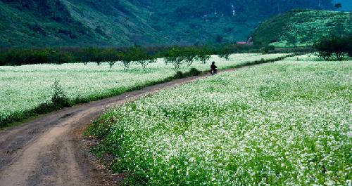 6 cánh đồng đẹp mê hồn xứ bắc