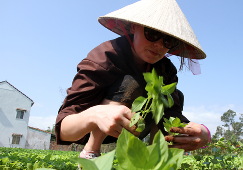 Khách tây tranh tài trồng rau với nông dân phố cổ