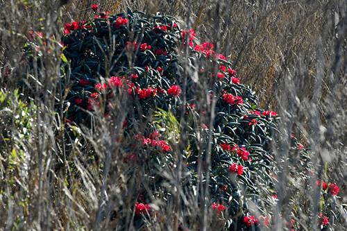 10 mùa săn hoa hấp dẫn nhất ở việt nam