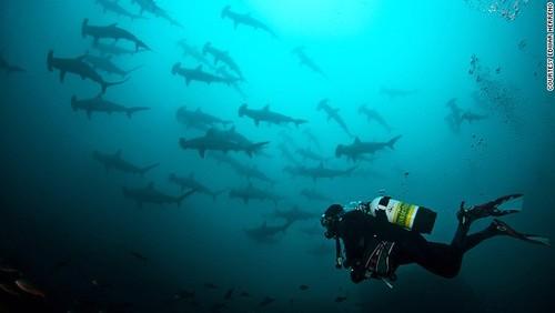 Tour mạo hiểm bơi cùng cá mập