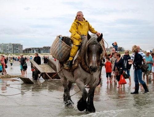 Đánh cá trên lưng ngựa tại bỉ
