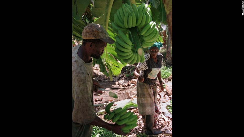 Điều chưa biết về jamaica quê hương của james bond