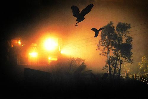 Thung lũng chim về tự sát