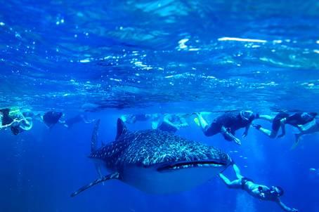 9 điều thú vị về thiên đường maldives