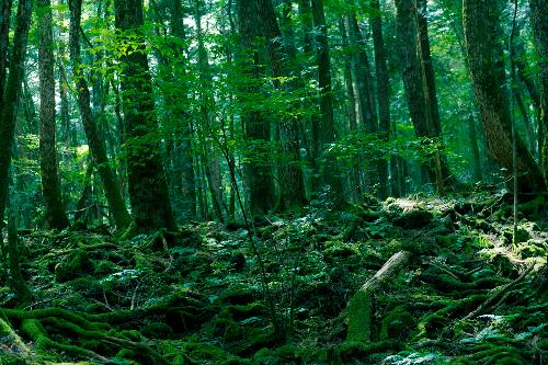 Khu rừng gợi cảm giác rùng rợn ở nhật bản