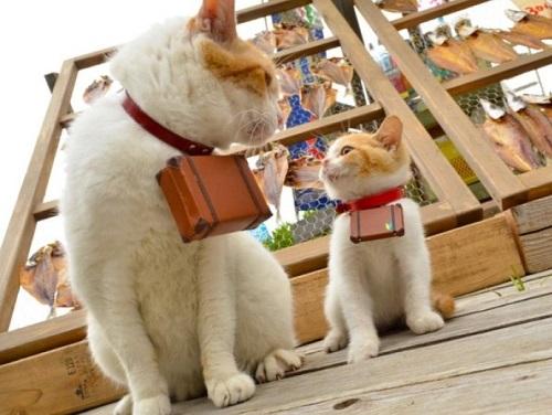 Đôi mèo cùng nhau phượt khắp nhật bản