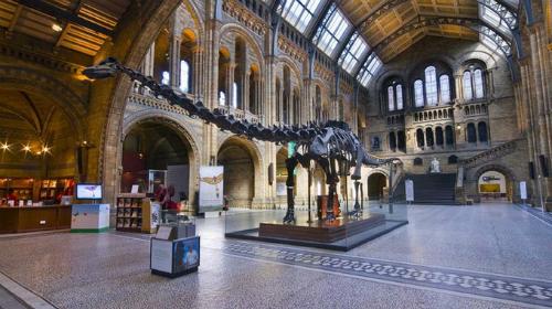 Xương khủng long thất thế tại bảo tàng anh