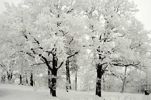 7 xứ sở thần tiên mùa đông