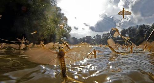 Khung cảnh thần tiên sông tisza mùa giao phối