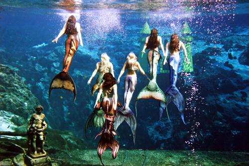 Show diễn của các nàng tiên cá