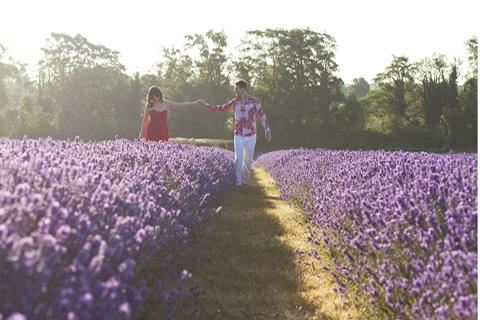 Khám phá cánh đồng hoa oải hương vào mùa hè