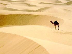 Sahara - đệ nhất sa mạc