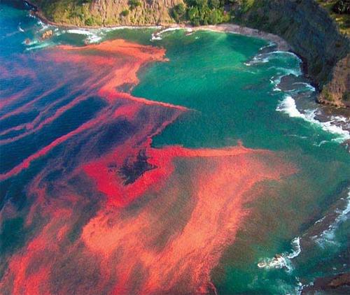 Thủy triều đỏ cơn ác mộng của mùa du lịch biển