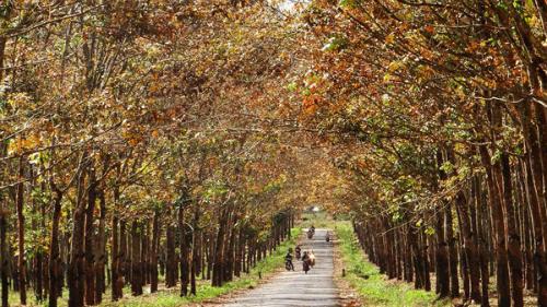 Vẻ đẹp những khu rừng khắp nước việt mùa thay lá