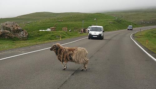 Faroe - quần đảo gắn liền với những ngôi nhà mái cỏ
