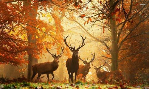 Khám phá mùa thu châu âu